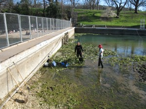 Volunteers cleaning algae in March