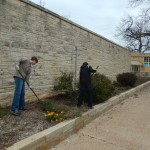 North side mulching crew in the bathhouse garden.