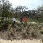 South side mulching crew in the new garden.