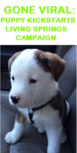 Viral Puppy